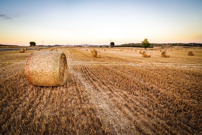 How to be a farmer in south-west Queensland